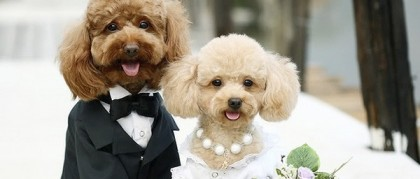 4606wedding_dog_2